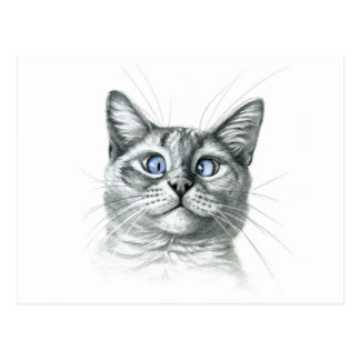 Cross Eyed cat G122 Cartão Postal