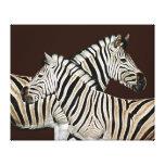 Cruzamento de zebra África do Sul