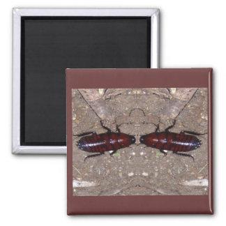 Culinária selvagem da guloseima - ciência insetos