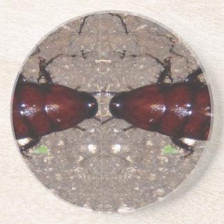 Culinária selvagem da guloseima - ciência insetos porta copos