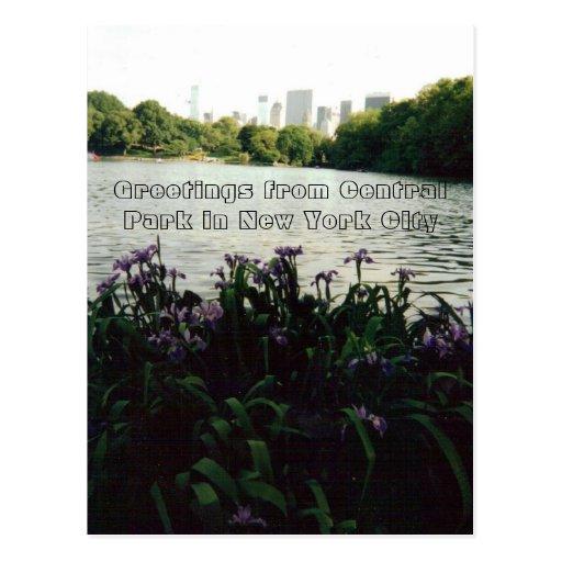 Cumprimentos do Central Park na Nova Iorque Cartões Postais