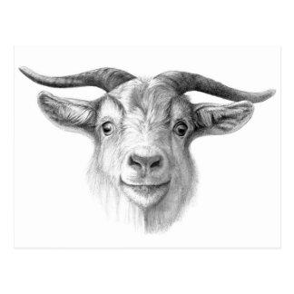Curious goat G124 Cartão Postal