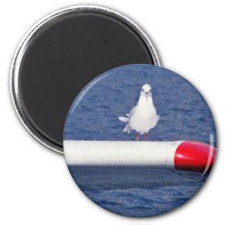 Cute Seagull White íman