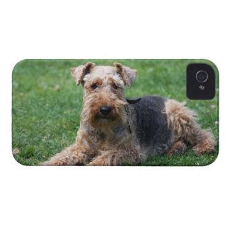 Da amora-preta bonito da foto do cão de galês Terr