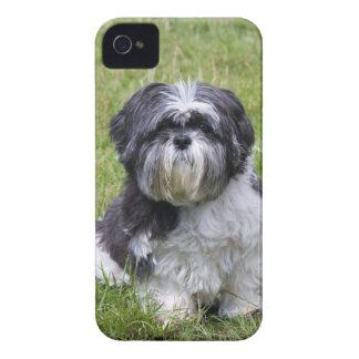Da amora-preta bonito da foto do cão de Shih Tzu c