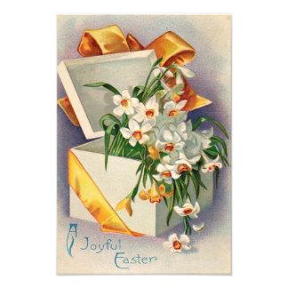 Daffodil atual Jonquil do presente Impressão De Foto