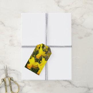 Daffodils amarelos florais