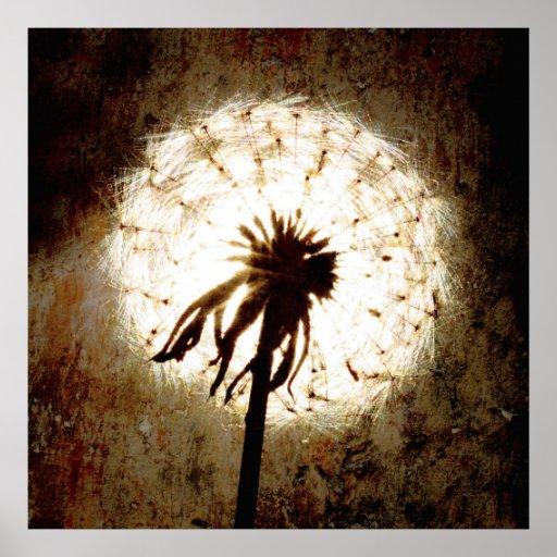 Dandelion espécie - Pusteblume arte Impressão