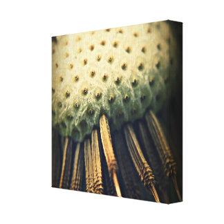 Dente-de-leão macro impressão esticado das canvas
