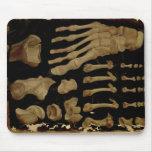 Desenho anatômico dos ossos do pé mousepad