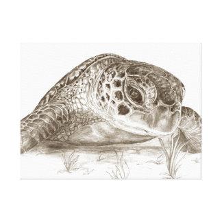 Desenho da tartaruga de mar verde