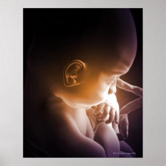 Desenvolvimento embrionário 5 poster