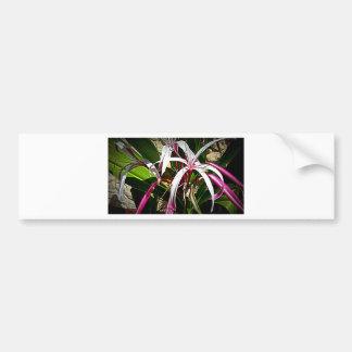 Design da flor de Leli (hymenocalis) por Admiro Adesivo