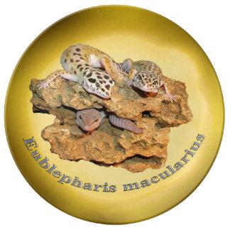 Design do geco do leopardo para tudo! prato de porcelana