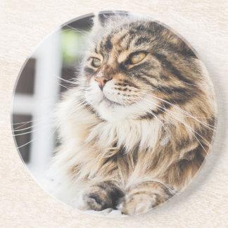 Design Siberian do gato persa do gato malhado Porta Copos De Arenito