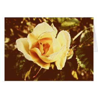 Desvanecido aumentou | cartão comemorativo