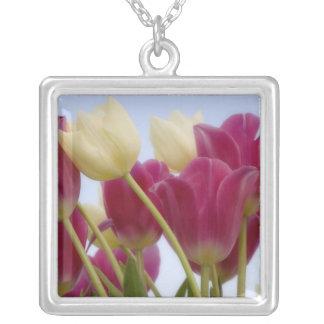 Detalhe de tulipas. Crédito como: Don Paulson/ Colar Banhado A Prata