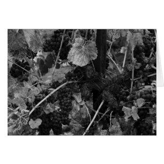 Detalhe de uvas, negociante de panos Vinhedo, Cartão Comemorativo