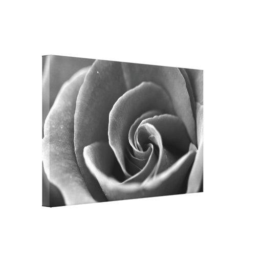 Detalhe preto e branco do rosa impressão de canvas envolvidas