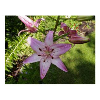 Dia de verão no jardim cartão postal
