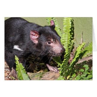 Diabo tasmaniano, Austrália Cartão