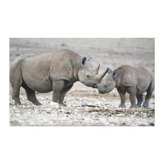 Diceros Bicornis do rinoceronte preto da mãe e da  Impressão Em Tela