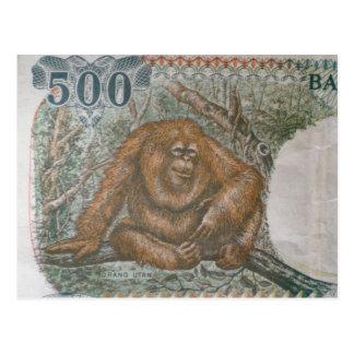 Dinheiro raro do orangotango cartão postal