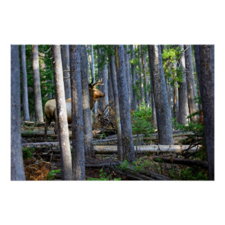 Discrição silencioso. Fotografia dos animais selva Poster