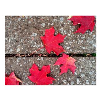 dispersão das folhas cartão postal