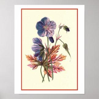 """Do """"ilustração botânica de Cranesbill prado"""" Poster"""