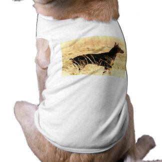 Doberman nos juncos secos que pintam a imagem camisa sem mangas para cachorro