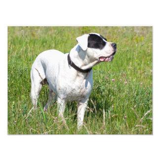 Dogo bonito Argentino Impressão De Foto
