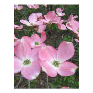 Dogwood cor-de-rosa panfletos