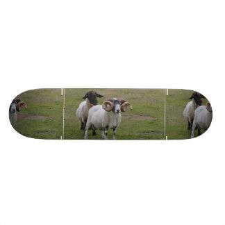 Dois carneiros são melhores de um shape de skate 21,6cm