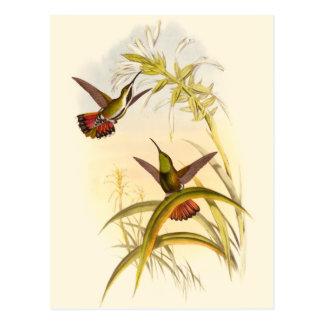 Dois colibris coloridos que apontam para a mesma cartão postal