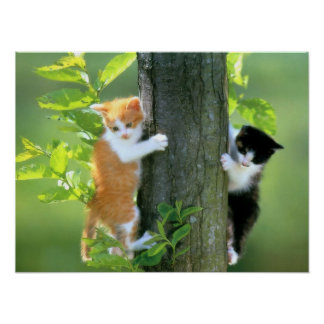 Dois gatinhos em uma árvore impressão