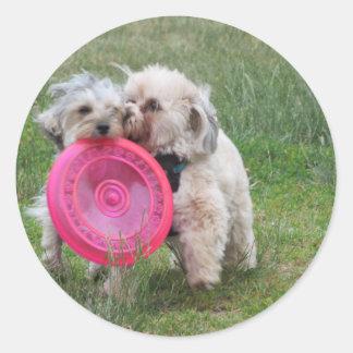Dois morkies com uma etiqueta do frisbee adesivo