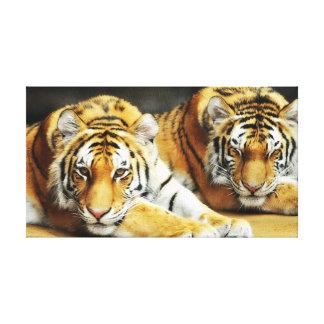 Dois tigres esticaram o impressão das canvas impressão em tela canvas