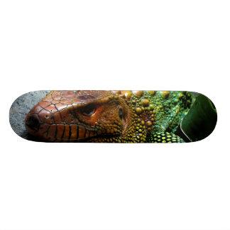 Dracaena do norte Guianensis do lagarto de Caiman Shape De Skate 21,6cm