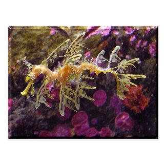 Dragão do mar cartoes postais