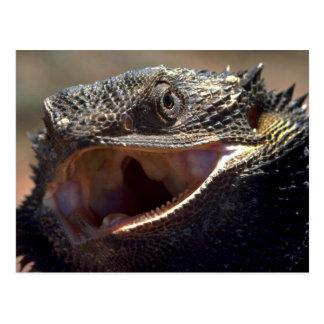 Dragão farpado, Austrália Cartao Postal