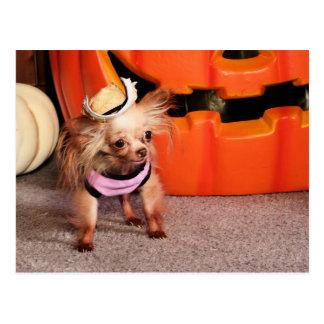 Dutchess - chihuahua - Photo-7 Cartão Postal