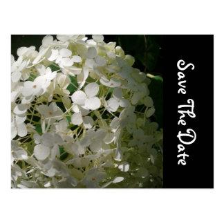 Economias da flor branca o cartão do casamento da  cartoes postais