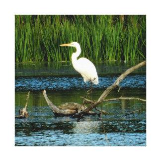 Egret nevado no impressão das canvas do registro