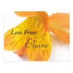 Elaine Cartões Postais