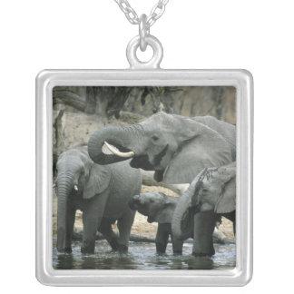Elefante africano, (africana do Loxodonta), Colar Banhado A Prata