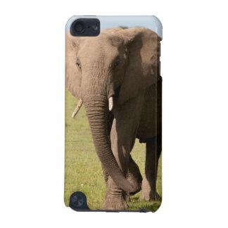 Elefante africano (Loxodonta Africana), Maasai