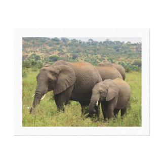 Elefante com bebê