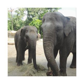 Elefante do Mama & do bebê