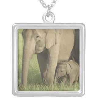 Elefantes indianos/asiáticos e jovens um, Corbett Colar Banhado A Prata
